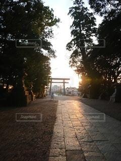 空,屋外,神社,鳥居,夕方,オレンジ,樹木,明るい