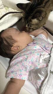 猫,屋内,景色,寝る,人物,人,赤ちゃん,幼児,睡眠,新生児,ベッド