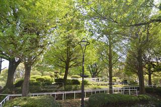 公園 - No.455951