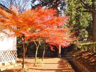 近くの木のアップの写真・画像素材[1634211]
