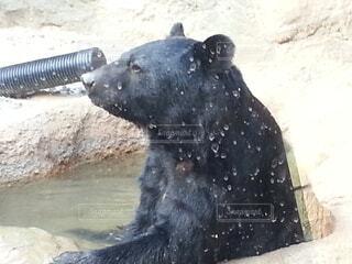 動物,屋外,クマ