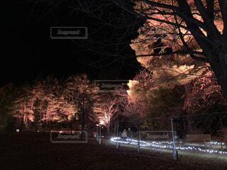 夜,屋外,幻想的,樹木,ライトアップ,照明,並木道