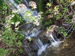 自然,花,屋外,緑,綺麗,水,枝,水面,葉,滝,光,樹木,草木