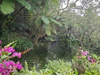 自然,花,屋外,ピンク,緑,川,水面,沖縄,景色,樹木,ジャングル,カラー,草木,ガーデン