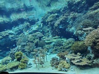 サンゴと魚の写真・画像素材[4141412]