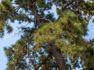 空,森林,屋外,樹木,松,草木