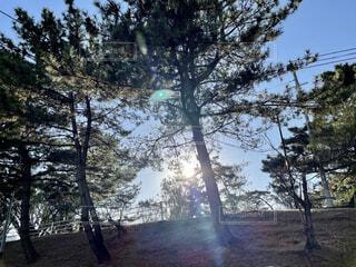 自然,風景,空,屋外,樹木,日陰,草木,針葉樹