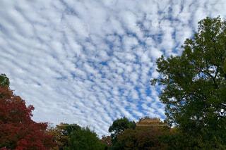 空,秋,屋外,雲,晴れ,曇り,樹木,天気,草木,羊雲,鱗雲