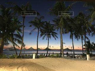 風景,海,空,屋外,ビーチ,砂浜,水面,樹木,ヤシの木,整列,草木,パーム,ヤシ目