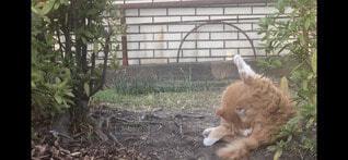 猫,公園,動物,屋外,かわいい,オレンジ,野良猫,午後,草木,野島公園,お尻の穴をを舐めている猫