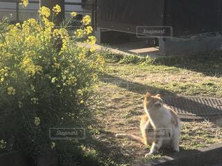 猫,自然,動物,屋外,野良猫,午後,のんびり,草木,菜花,野島公園,猫の日
