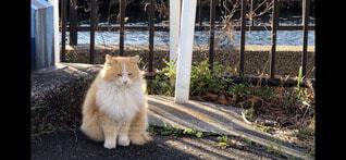 猫,動物,屋外,川辺,川,座る,野良猫,地面,鉄欄