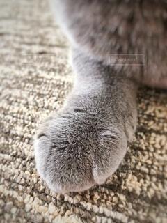 猫,動物,かわいい,手,グレー,ネコ科,クリームパン