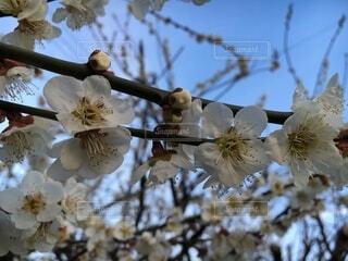 空,花,春,屋外,樹木,草木,ブルーム