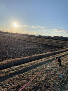犬,自然,風景,空,チワワ,屋外,太陽,ビーチ,雲,散歩,田舎,景色,癒し,仔犬,プードル,チワプー