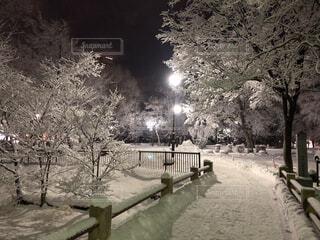 空,公園,夜,夜景,雪,屋外,白,きれい,綺麗,黒,暗い,雪景色,美しい,樹木,街灯,寒い,地面,草木,新雪,スケッチ,赤外線