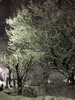 公園,夜,夜景,雪,屋外,白,きれい,綺麗,黒,暗い,雪景色,美しい,樹木,街灯,寒い,草木,新雪,スケッチ