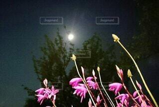 公園,花,夜,ピンク,月,草木