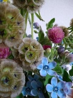 花,草木,ブルーム,フローラ