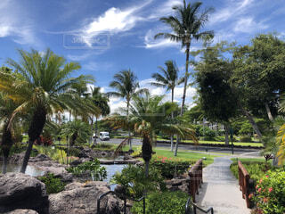 空,木,海外,雲,綺麗,青空,晴天,青,車,道路,景色,樹木,岩,道,旅行,ヤシの木,ホテル,ハワイ,リゾート,リゾートホテル,ハワイ島,デート,海外旅行,リゾート地,オアシス,おしゃれ