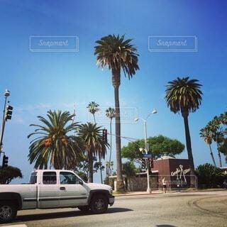 空,屋外,海外,南国,ビーチ,車,道路,アメリカ,景色,観光,樹木,旅行,信号,ヤシの木,LA,ロサンゼルス,リゾート,留学,海外旅行,西海岸,サンタモニカ,青色,草木,観光客,パーム,車両,ホイール,背の高い木,陸上車両