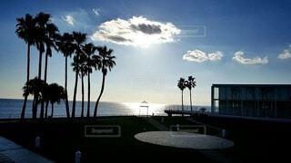 海とヤシの木と空の写真・画像素材[4145701]
