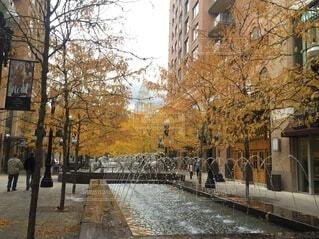 噴水と紅葉している街路樹の写真・画像素材[4151179]