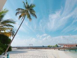 ヤシの木とビーチの写真・画像素材[4151265]