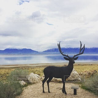 自然,風景,空,動物,屋外,湖,雲,綺麗,水面,展望,アメリカ,景色,草,鹿,パノラマ,トナカイ,景観,景勝地,州立公園,ソルトレイクシティ,アンテロープアイランド,塩の湖,グレイトソルトレイク