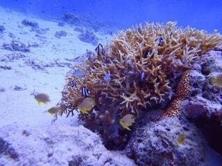 珊瑚と熱帯魚の写真・画像素材[4159420]