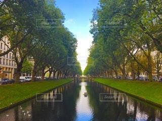 ヨーロッパの優雅な並木道の写真・画像素材[4163731]