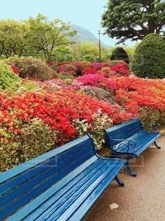 青いベンチの写真・画像素材[4367800]