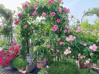 花園のクローズアップの写真・画像素材[4386417]