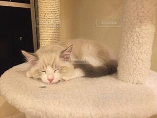 ベッドに横たわる猫の写真・画像素材[4454164]