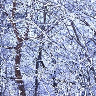 自然,風景,冬,森林,雪,屋外,雪景色,霜,冷たい,樹氷,草木,冷凍