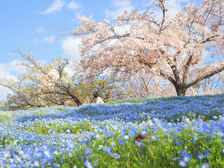 空,花,春,屋外,青空,草,樹木,景観,草木,ブロッサム