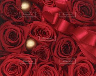 花,屋内,バラ,薔薇