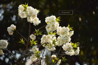 花,白,草木,ブルーム,フローラ