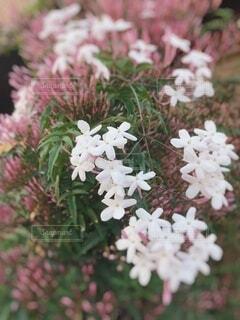 花,草木,白とピンク