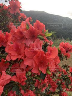 花,赤,草木,ガーデン,ブルーム,フローラ