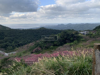 自然,風景,空,花,屋外,雲,山,草,草木