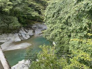 自然,屋外,湖,川,水面,樹木