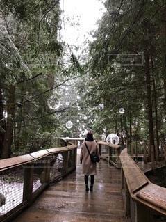 大粒の雪の写真・画像素材[4137638]