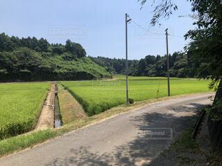 夏の田舎の風景の写真・画像素材[4142490]