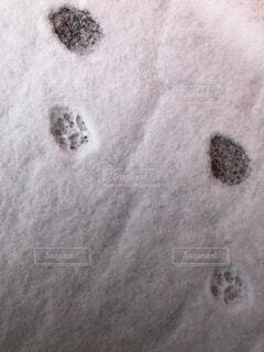 猫の痕跡の写真・画像素材[4137167]