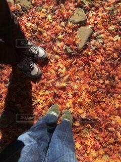 紅葉の中の夫婦の足元の写真・画像素材[4194751]