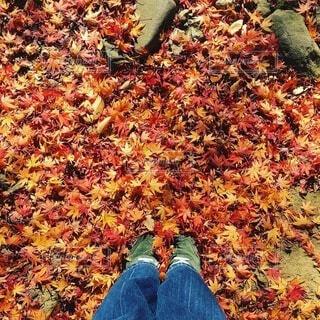 紅葉の中の女性の足元の写真・画像素材[4194750]