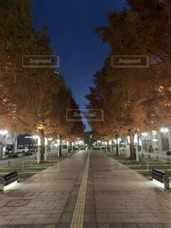 風景,空,夜,屋外,樹木,都会,道,歩道,地面,明るい,街路灯