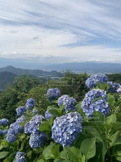 花のクローズアップの写真・画像素材[4152563]