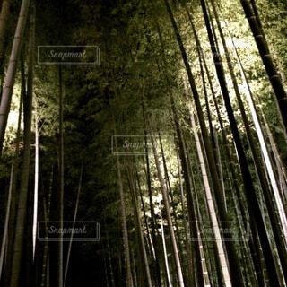 自然,風景,森林,樹木